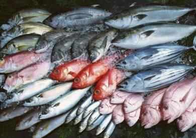 Pemborong Ikan Frozen di kawasan klang valley