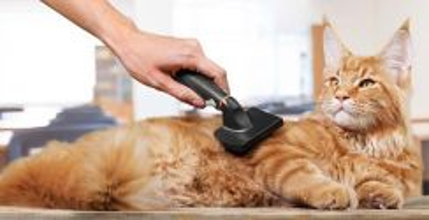 Servis groming / mandikan kucing