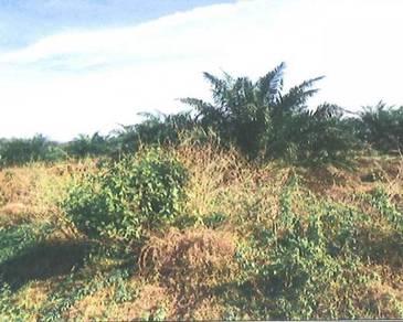 Agricultural Land in Kampung Ulu Lalang, Rantau, Negeri Sembilan