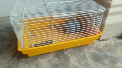 Hamster cage(used)