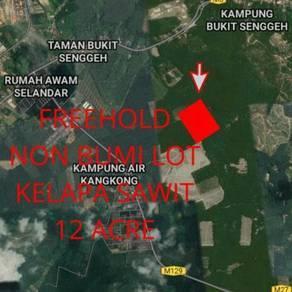 Tanah Pertanian Bukit Senggeh(Freehold Non Bumi)