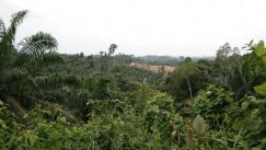Freehold agricultural land for sale