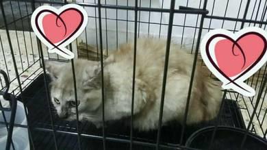 Meow manje kucing