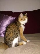 DLH for rehome