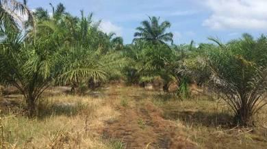 Tanah sawit untuk dijual berukuran 6ekar