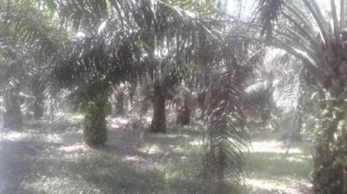 Tanah sawit di kG TENGAH utk dijual
