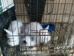 Rabbit angora mix for sale