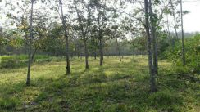 Tanah ladang getah.tanah dusun dan lot tanah koson