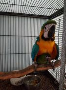 Hard peark gorgeous macaw parrots