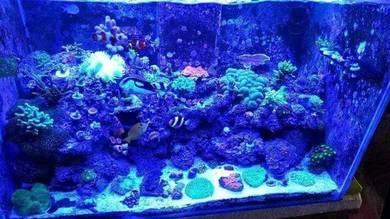 Aquarium led marine tank 3ft