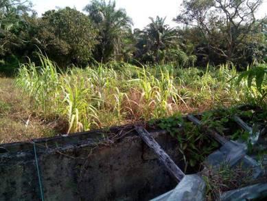 Projek Tanaman Tebu