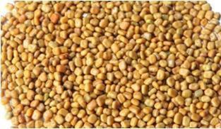 CALOPOGONIUM MUCUNOIDES (Cover Crop Seed)