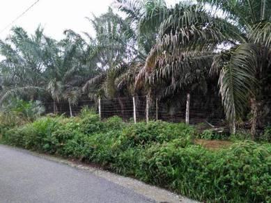 Jalan Mawai Batu 12 Oil Palm Tree Land