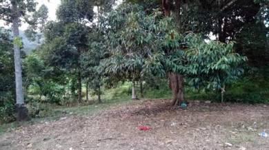 Tanah Mcl Area Kg Paku Alor Gajah berserta rumah