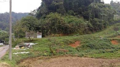 2.5 acres agricultural land freehold cameron highlands ringlet