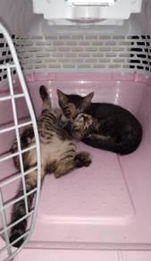 2 Ekor kucing untuk dilepaskan