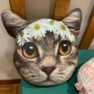 Typo Flower Crown Cat Plushie
