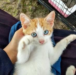 Marble cat