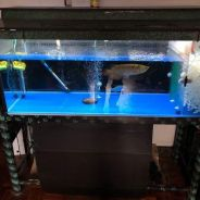 Aquarium and accessory for sell