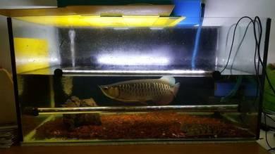 Fish, aquarium and equipment