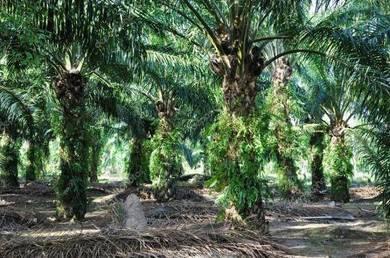 Land of Telok Panglima Garang