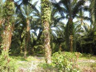 300 acres to 2200 acres residential zoning land, ayer keroh, melaka