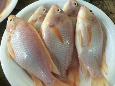Ikan2 sedapp