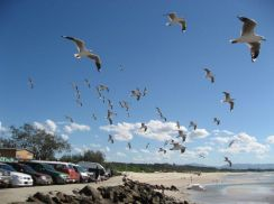 AMI Travel | Byron Bay Day Tour, Gold Coast