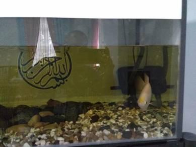 Aquarium 3kaki+ikan kaloi