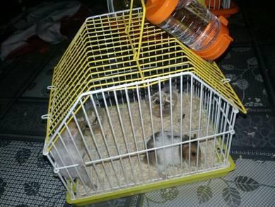 3 Pasang anak hamster serta sangkar
