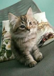 Kitten DLH for rehome