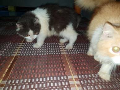 Kitten ingn dilepaskan