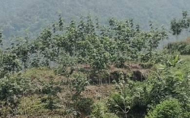 Tanah NT 6.95 ekar untuk dijual