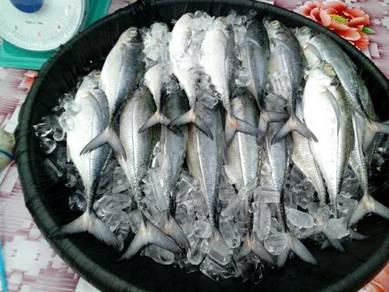 Ikan cencaru fresh Cod rm10 sekilo