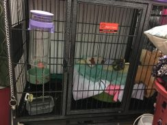 Pets cage for dogs/cats