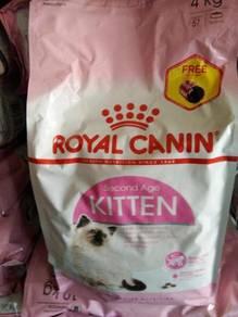 RC Kitten 4 KG