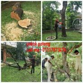 Service (pokok potong )