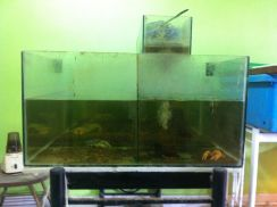 Aquarium 4x2x1