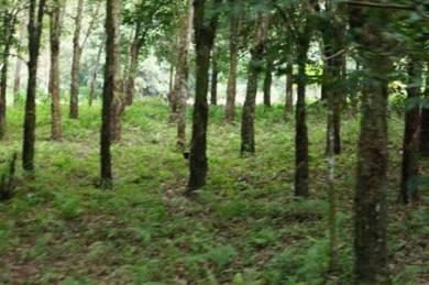 Sungai Siput, iPOH, 9 acres agricultural land, Perak,