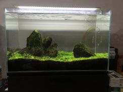 Aquarium | fluval filter | aquascape