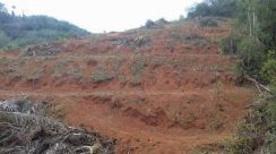 Tanah Pertanian Gemeh Asahan