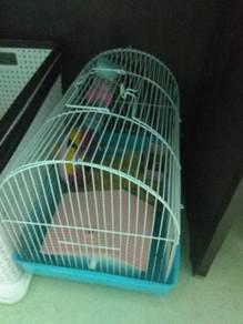 Hamters