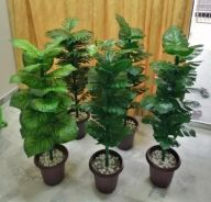 Pokok Hiasan Viral