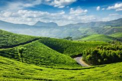 4D3N Honeymoon Cochin & Munnar, India