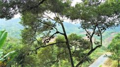 5 acres Raub Durian Retreat Orchard for family and friends