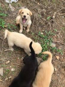 Puppies for adoption in Melaka