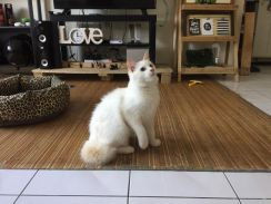 Kucing + barang2