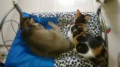 Metal Frame Mattress Included Pet Cushion Bed