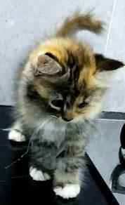 Kitten kucing DLH