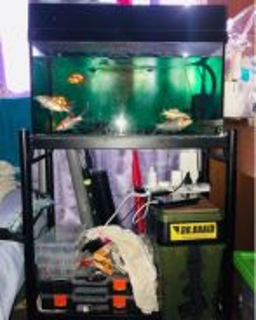 Aquarium 2 feet / Akuarium 2 kaki